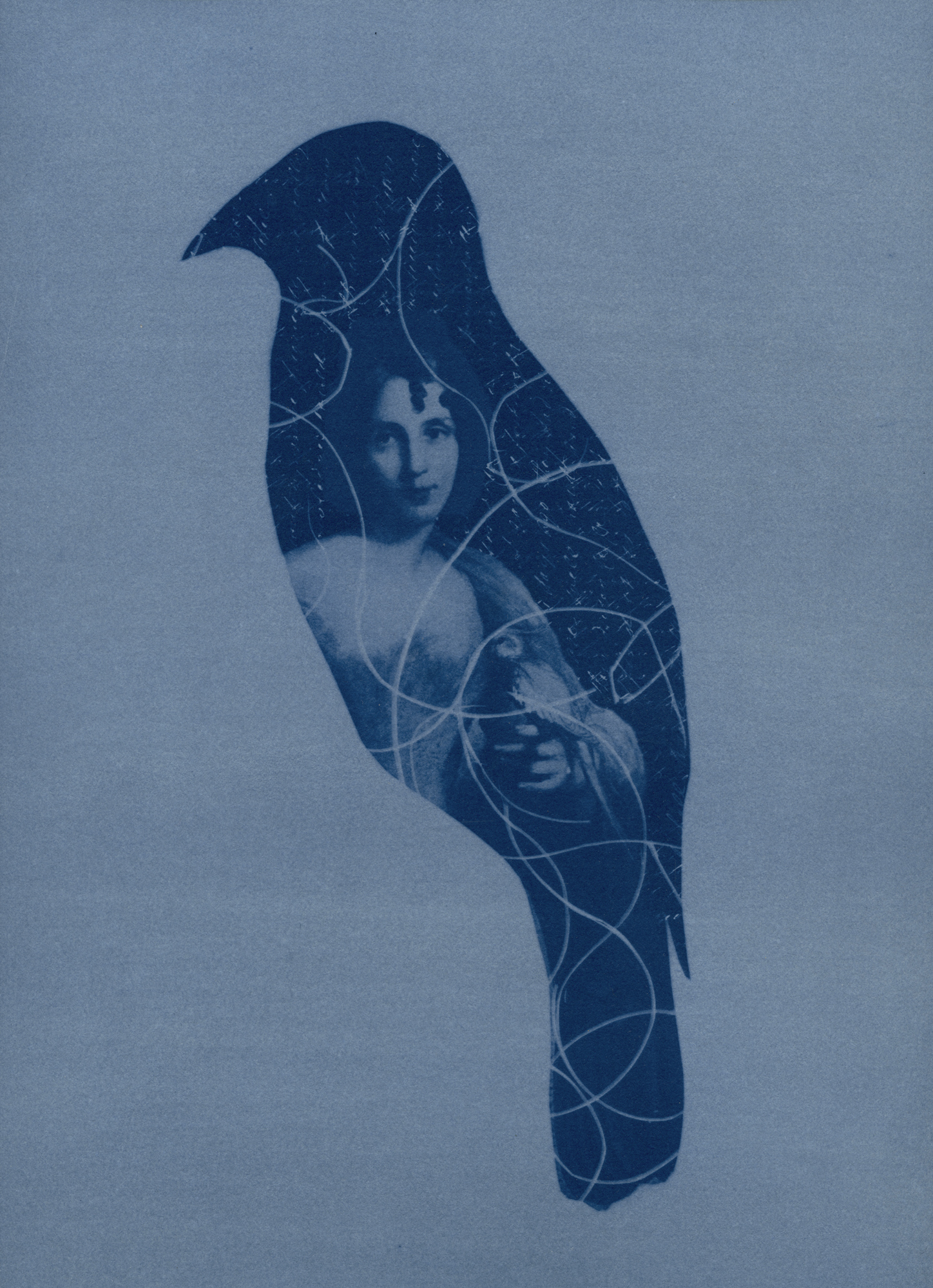'Eliza Gould and the Satin Bowerbird', 2021 Unique State Cyanotype, $490, framed